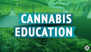 Education for cannabis
