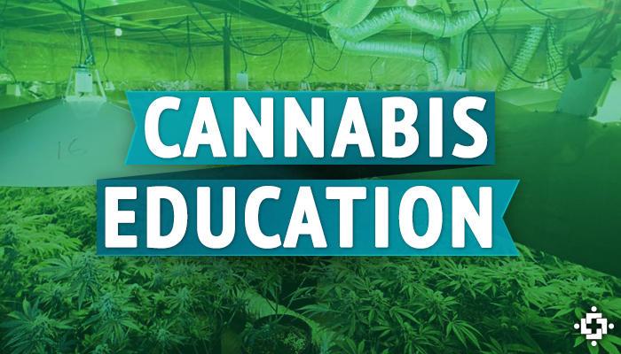 Education for cannabis