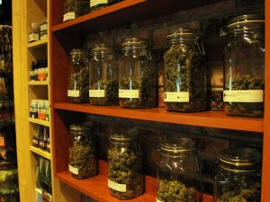 Marijuana Dispensary Business Plan