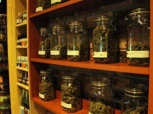 Marijuana Dispensary Business Plan
