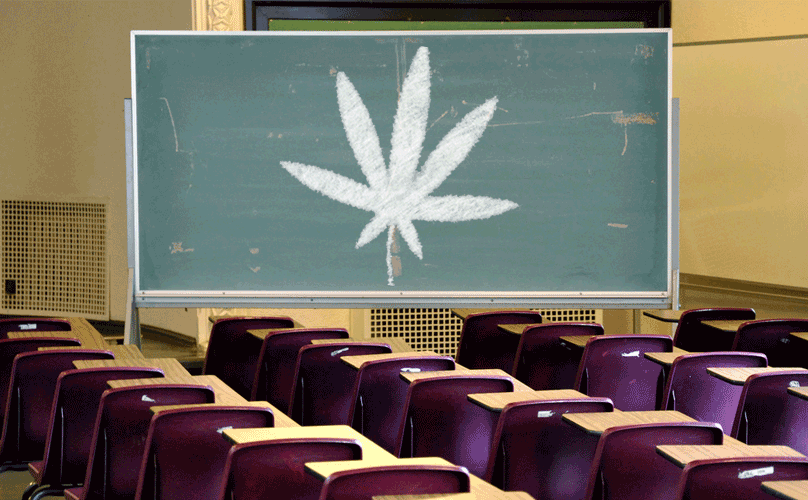 Weed Business Courses
