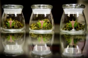 Medical Marijuana Seminars