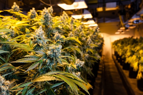 Marijuana academy