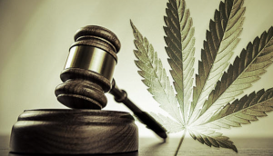 Cannabis law firm