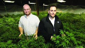 Cannabis law firm