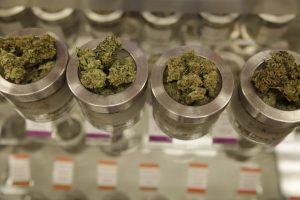 Medical marijuana training