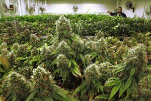 Medical marijuana business permits