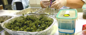 Education for weed business